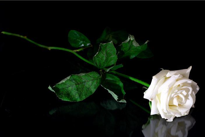Resultado de imagem para imagem a boneca e a rosa branca